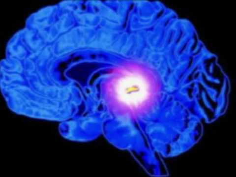 Fluoride And The Pineal Gland