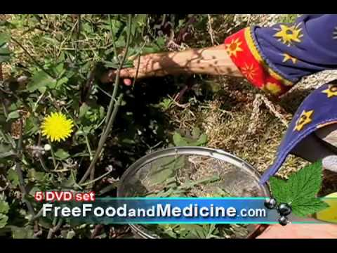 Markus Rothkranz: Wild Food Breakfast of Weeds Smoothie