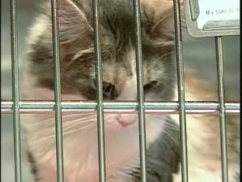 An Animal Shelter Like No Other (Washington Animal Rescue League)